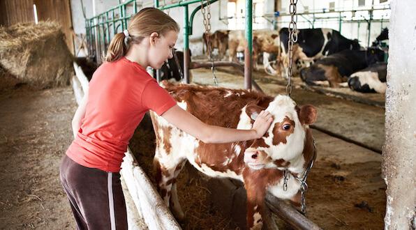 Girl-Cow_112833821_600